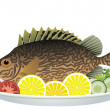 Vector fish and vegetables on a plate — Stock Vector #10551613