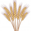 Stock Vector: Vector wheat ears