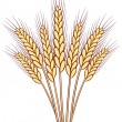 Bunch of vector wheat ears — Stock Vector
