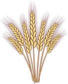 Banda vektorové pšenice uši — Stock vektor