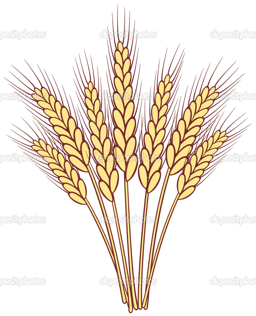 Bunch of vector wheat ears — Stock Vector #10584640