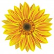 Vector sunflower — Stock Vector