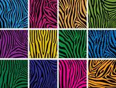 Vector set of colorful skin textures of zebra — Stock Vector