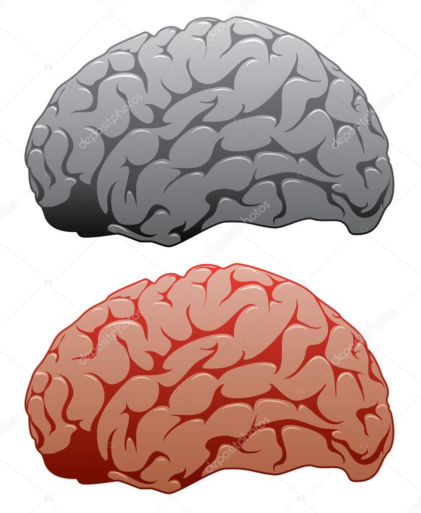 Vector set of human brains — Stock Vector #8703773