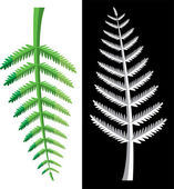 Vector fern leaves — Stock Vector