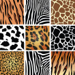 Vector animal skin textures - Stock Vector