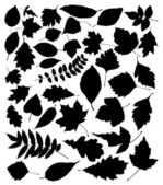 Vector black silhouettes of leaves — Stock Vector
