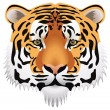 Stock Vector: Vector tiger head
