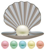 Vector pearls and a shell — Stock Vector