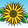 Vector sunflower — Stock Vector #9527812