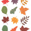 Stock Vector: Vector set of colorful autumn leaves