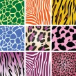 Royalty-Free Stock Vector Image: Vector colorful animal skin textures