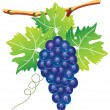 Vector grape cluster — Stock Vector