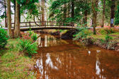 Bridge over stream in vibrant Winter Autumn Fall forest landscap — Stock Photo