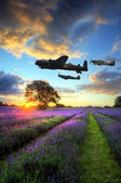 World War 2 RAF airplanes flying at sunset over vibrant lavender — Stock Photo