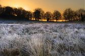 Frosty Winter landscape across field towards vibrant sunrise sky — Stock Photo