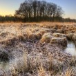 Beautiful frozen field Winter landscape with frosty grass — Stock Photo