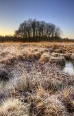 Beautiful frozen field Winter landscape with frosty grass — Stock Photo