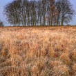 Golden grass landscape with tree silhouettes on horizon at sunri — Stock Photo