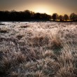 Frosty Winter landscape across field towards vibrant sunrise sky — Stock Photo