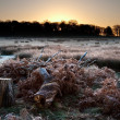 Frosty Winter landscape across field towards vibrant sunrise sky — Stock Photo #8762150