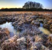 Paisaje de invierno hermoso campo congelado con la hierba helada — Foto de Stock