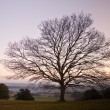 Single bare Winter tree against vibrant sunset — Stock Photo