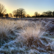Frosty Winter landscape across field towards vibrant sunrise sky — Stock Photo #8825902
