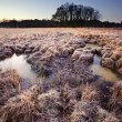 Stock Photo: Beautiful frozen field Winter landscape with frosty grass