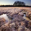 Beautiful frozen field Winter landscape with frosty grass — Stock Photo #8826579