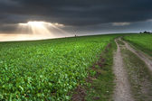 Countryside landscape path leading through fields towards dramat — Stock Photo