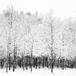 Stock Photo: Beautiful snow and frost covered trees Winter landscape