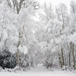 Royalty-Free Stock Photo: Beautiful snow and frost covered trees Winter landscape