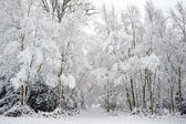 Beautiful snow and frost covered trees Winter landscape — Stock Photo