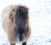 Midilli içinde kar kış manzara örtülü — Stok fotoğraf