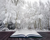 Winter wonderland in pages of magical book — Stock Photo
