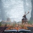 Fallow deer stag in pages of magical book — Stock Photo #9644944