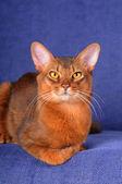Pretty cat lying on the sofa — Stock Photo