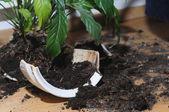 Pot ile çiçek kadar kırık — Stok fotoğraf
