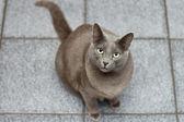 Katze im stock nachschlagen warten — Stockfoto