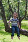 Little boy and big tree — Stock Photo