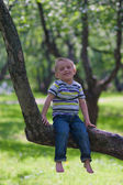 Little boy and big tree — Stock Photo