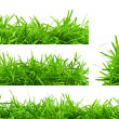 Backgrounds of spring green grass — Stock Photo