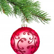 Red ornament christmas ball in fir tree — Stock Photo #9473322