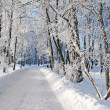 Winter road — Lizenzfreies Foto