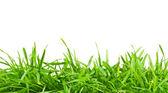 Zelená čerstvá jarní tráva — Stock fotografie