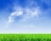 Zielona trawa pod błękitne niebo — Zdjęcie stockowe