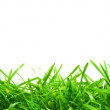 Fresh spring green grass — Stock Photo #9973797