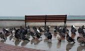 Wet birds — Photo