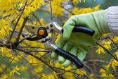 Pruning shrubs — Stock Photo